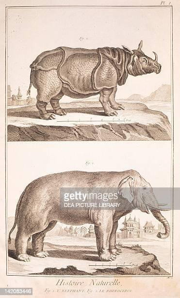 Plate showing rhinoceros and elephant Engraving from Denis Diderot Jean Baptiste Le Rond d'Alembert L'Encyclopedie 17511757 Entitled Histoire...