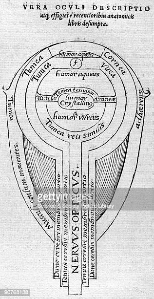 Plate taken from the 1572 Latin edition of 'Opticae Thesaurus' by Alhazen Arab scientist Alhazen is considered the 'father of modern optics' Born in...