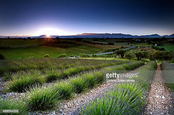 Plateau di Valensole