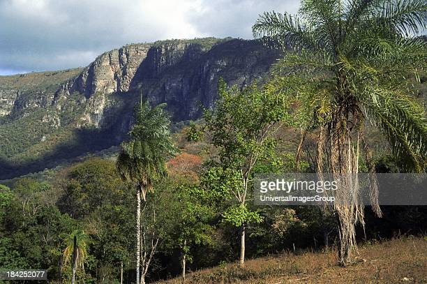 Plateau in Brazilian Highlands Goiás State Brazil palm trees in foreground are Acrocomia cf aculeata a very widespread and variable species from...