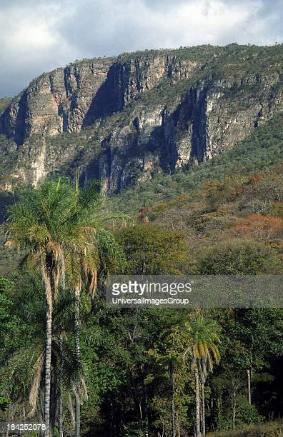 Plateau in Brazilian Highlands Goiás State Brazil palm trees in foreground is Acrocomia cf aculeata a very widespread and variable species from...