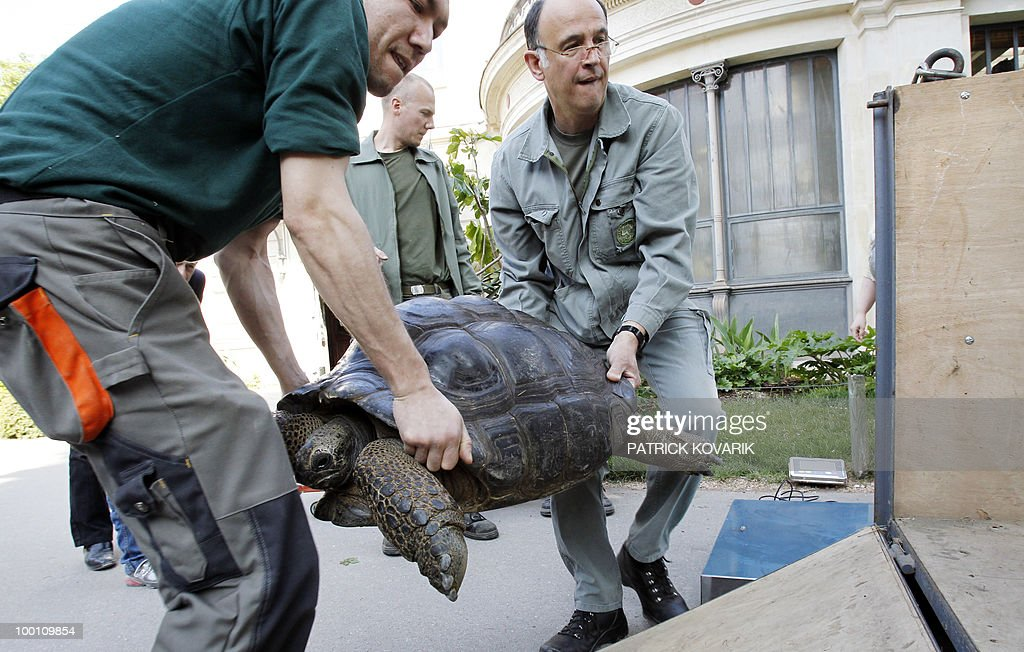 'Platine', a giant turtle from the Seychelles, is brought to its summer exterior quarter at the Jardin des Plantes menagerie by vets and employees on May 21, 2010.
