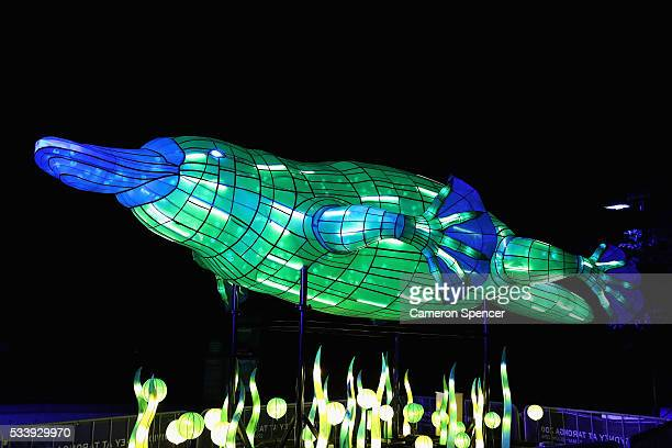 A platypus light sculpture is displayed during a media preview of Vivid Sydney illuminated displays at Taronga Zoo on May 24 2016 in Sydney Australia...