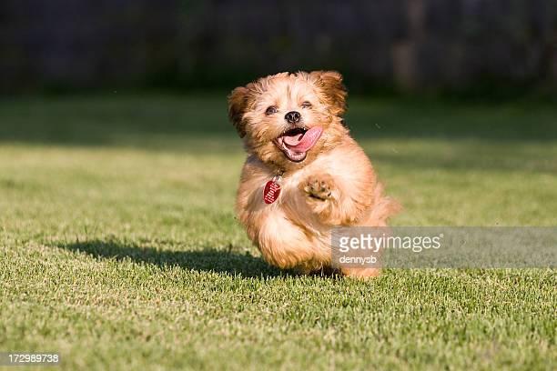 遊び心たっぷりの子犬ランニング