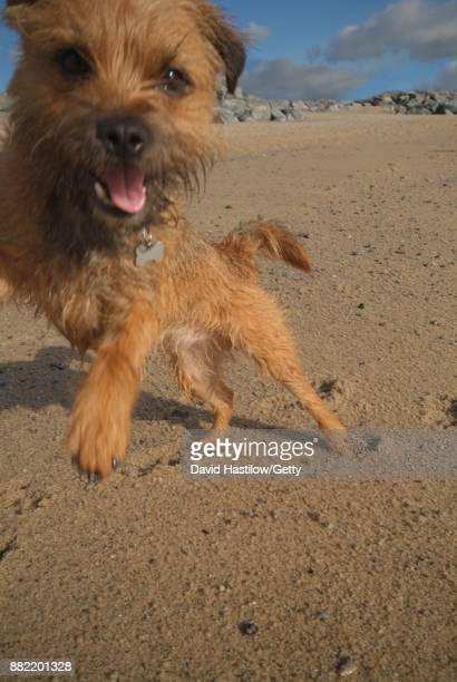 Playful dog jumping up to camera on the beach