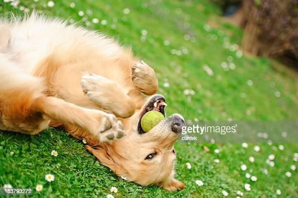 Verspielte Hund
