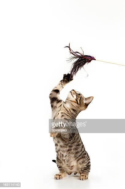 Giocoso gattino