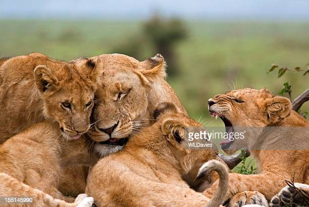 Ludique Lion Cubs