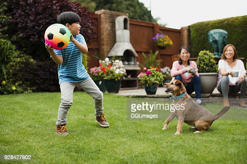 Playing Fetch in the Garden : Stock Photo