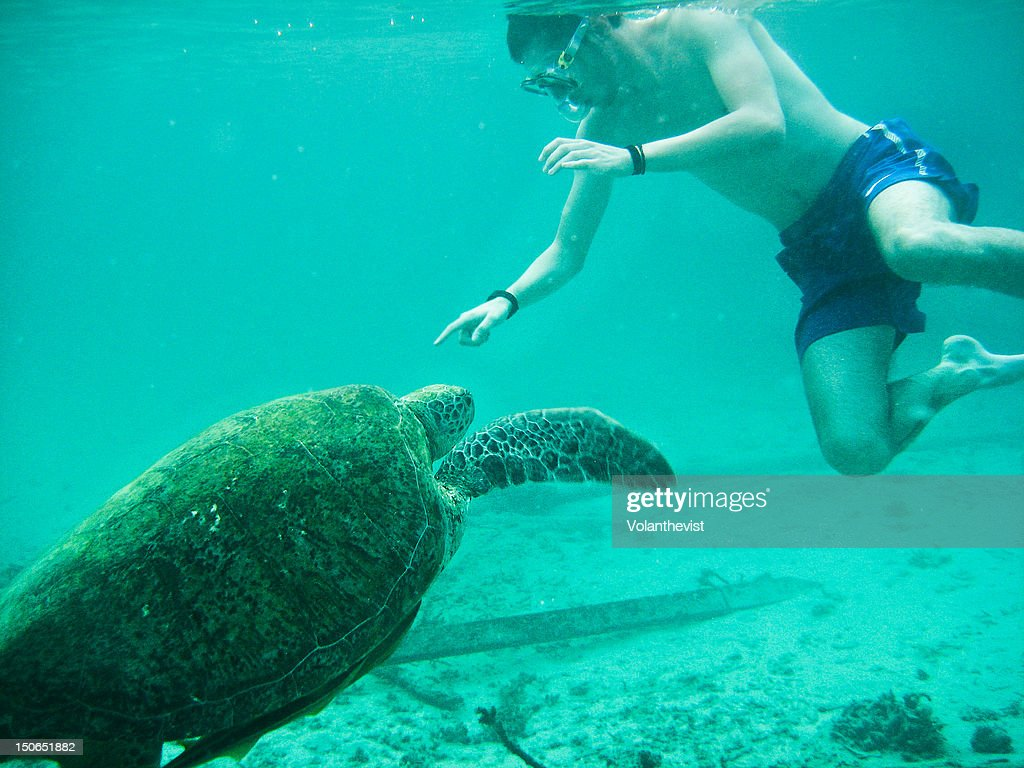Playing with big turtles : Stock Photo