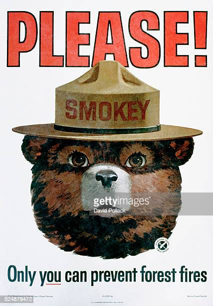 how can we prevent forest fires