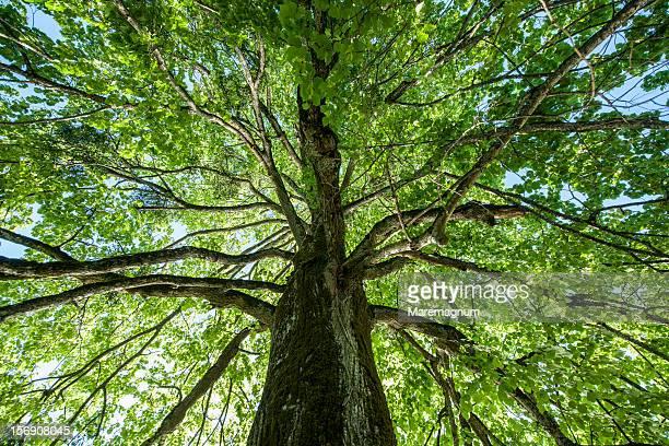 Plitvice lakes National Park, tree