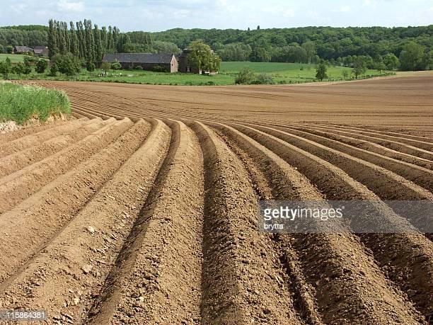 Dedicati furrows terreno agricolo con colture di, pronto per la primavera