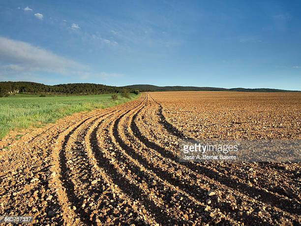 Ploughed field and field sowed with wheat