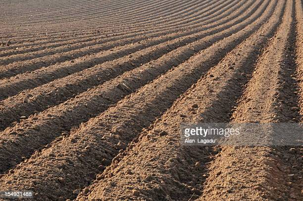 Ploughed field,Jersey.