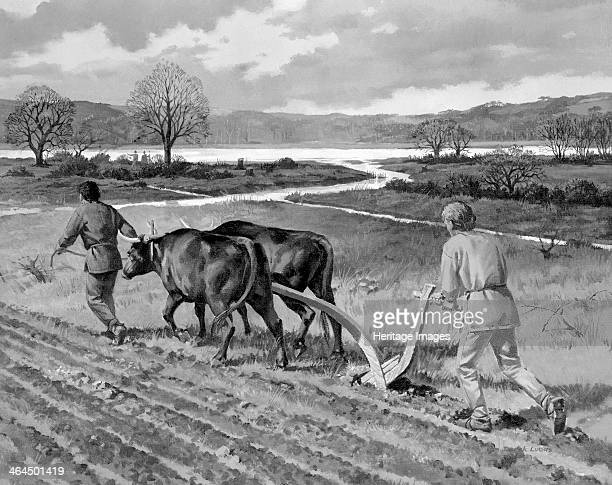 Ploughing in the Bronze Age Artist's impression of cultivation next to the Thames based on recently excavated evidence from a site in Bermondsey