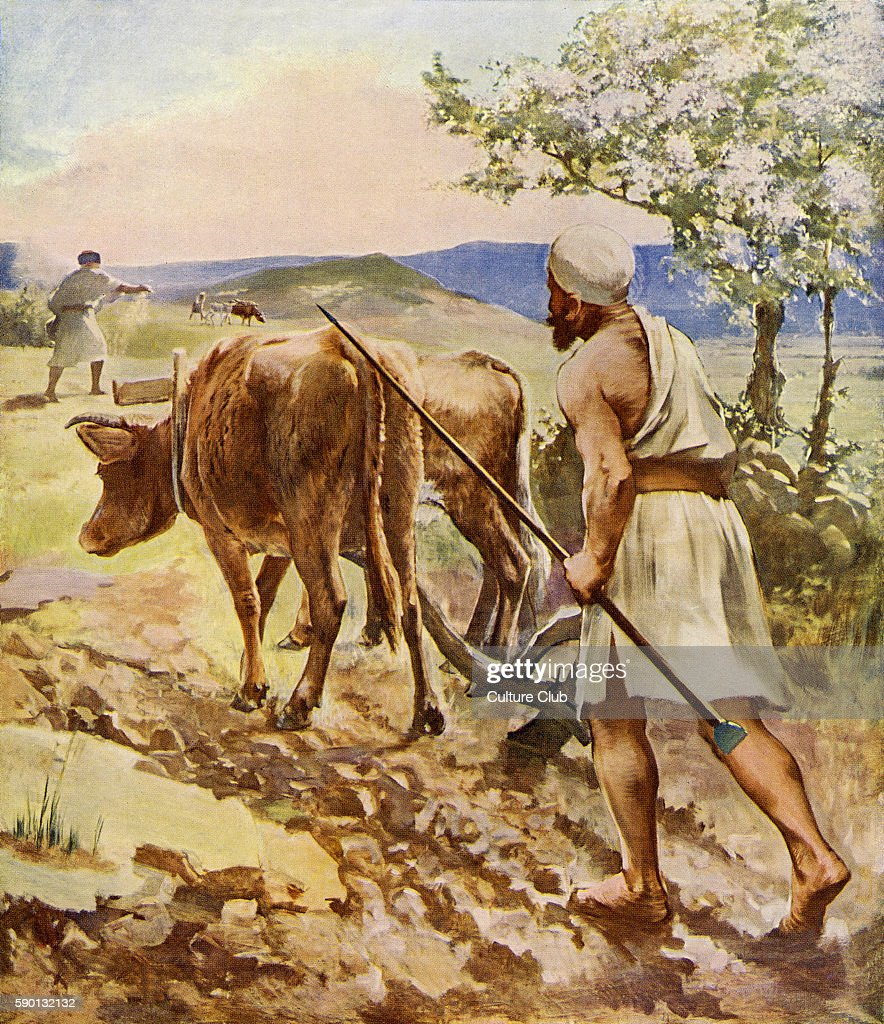 Ploughman working in the fields with ox drawn plough near Nazareth 1913 illustration based on travel in the Holy Land