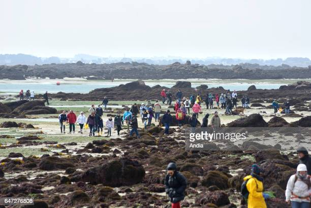 Plouguerneau on spring tide of the century The sea retreated far off for the pleasure of shellfish gatherers Other people chose to walk to the ile...