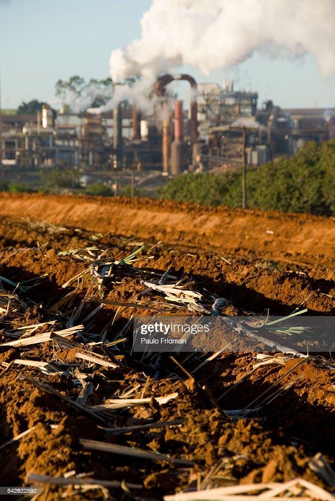 Plowed crops for Sugar Cane near the Cerradinho Ethanol and Sugar Mill in Cantaduva Brazil | Location Cantaduva Brazil