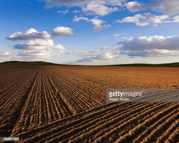 Plowed Fiel landscape