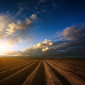 Plowed field. Beautiful agricultural landscape.