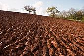 Plowed field furrows
