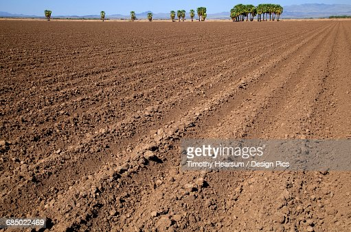 A plowed field in autumn awaits planting of the next crop, palm trees, mountains and blue sky are in the background, near Ehernsburg : Stock Photo