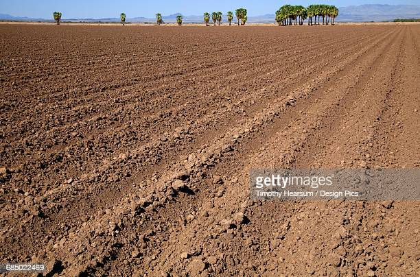 A plowed field in autumn awaits planting of the next crop, palm trees, mountains and blue sky are in the background, near Ehernsburg
