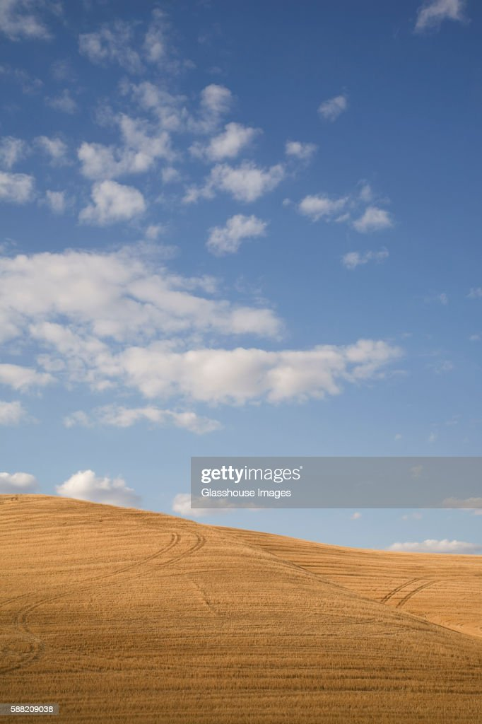 Plowed Wheat Field and Sky