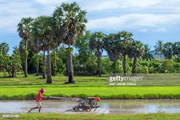 Plowman in Kampot province (Cambodia)