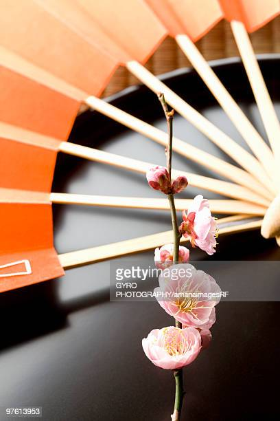 Plum blossoms and a folding fan