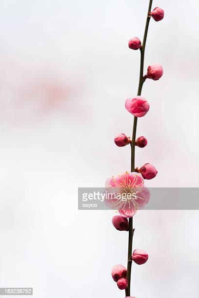Prune de fleurs