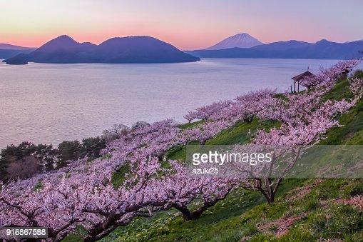 Plum trees and Lake Toya and Mt.Yotei : Stock Photo