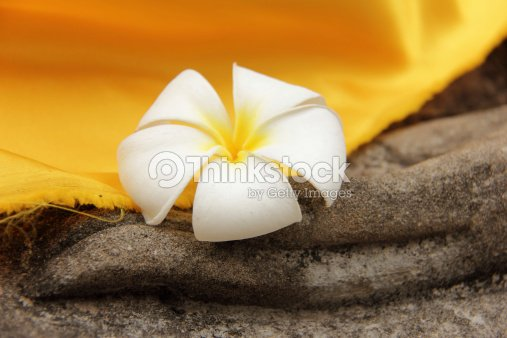 plumeria flower rested on a Buddha statue's hand : Stock Photo