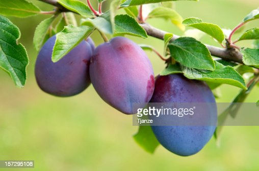 Plums group