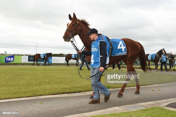 Poetic Ray parades before the Mark Struth Signs Maiden Plate at Warrnambool Racecourse on June 25 2017 in Warrnambool Australia