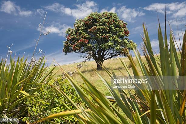 Pohutukawa Tree and Flax bushes