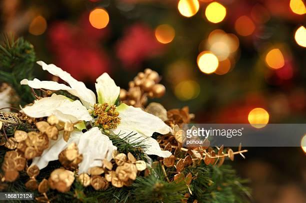 Poinsettia et illuminations de Noël