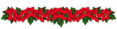Red Poinsettia flower in row, Euphorbia pulcherrima, christmas ornament