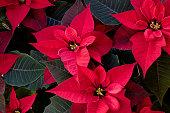 Close up image of plant. Image shot with Canon Rebel T6s 24 Megapixel, 24-105mm f/4L IS USM lens.