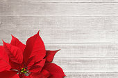 A red poinsettia rests on whitewashed boards.  The negative space created by the whitewashed boards provides ample room for copy and text.