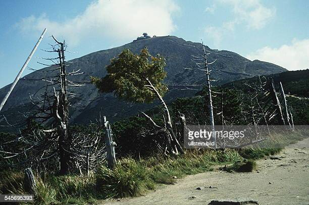 Poland forest decline because of Acid rain at Giant Mountains in the background the Snezka 1993