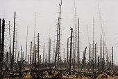 Poland, Karkonosze mountains, dead forest from Acid rain pollution
