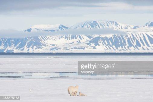Polar Bear and Cubs on Arctic Sea Ice