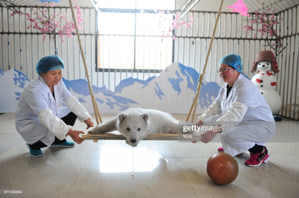 Polar Bear Cub Makes Her Public Debut in China