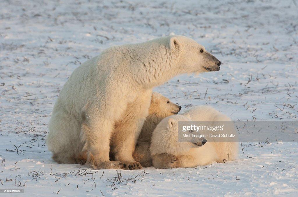from Jordyn gay polar bear free xxx video