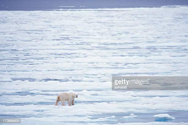 Eisbär Jäger