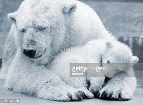 Oso Polar madre
