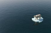 Polar bear on a little iceberg