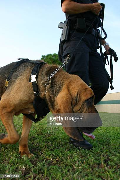Police Bloodhound Tracking